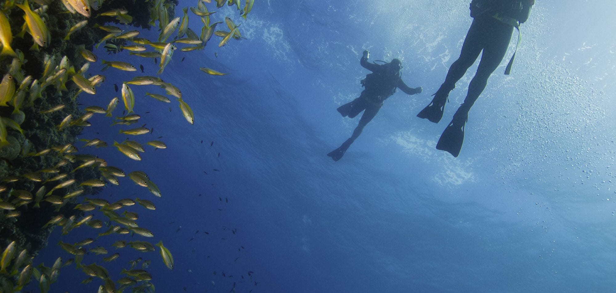 Divers and Yellow Tail - Ribbon Reefs