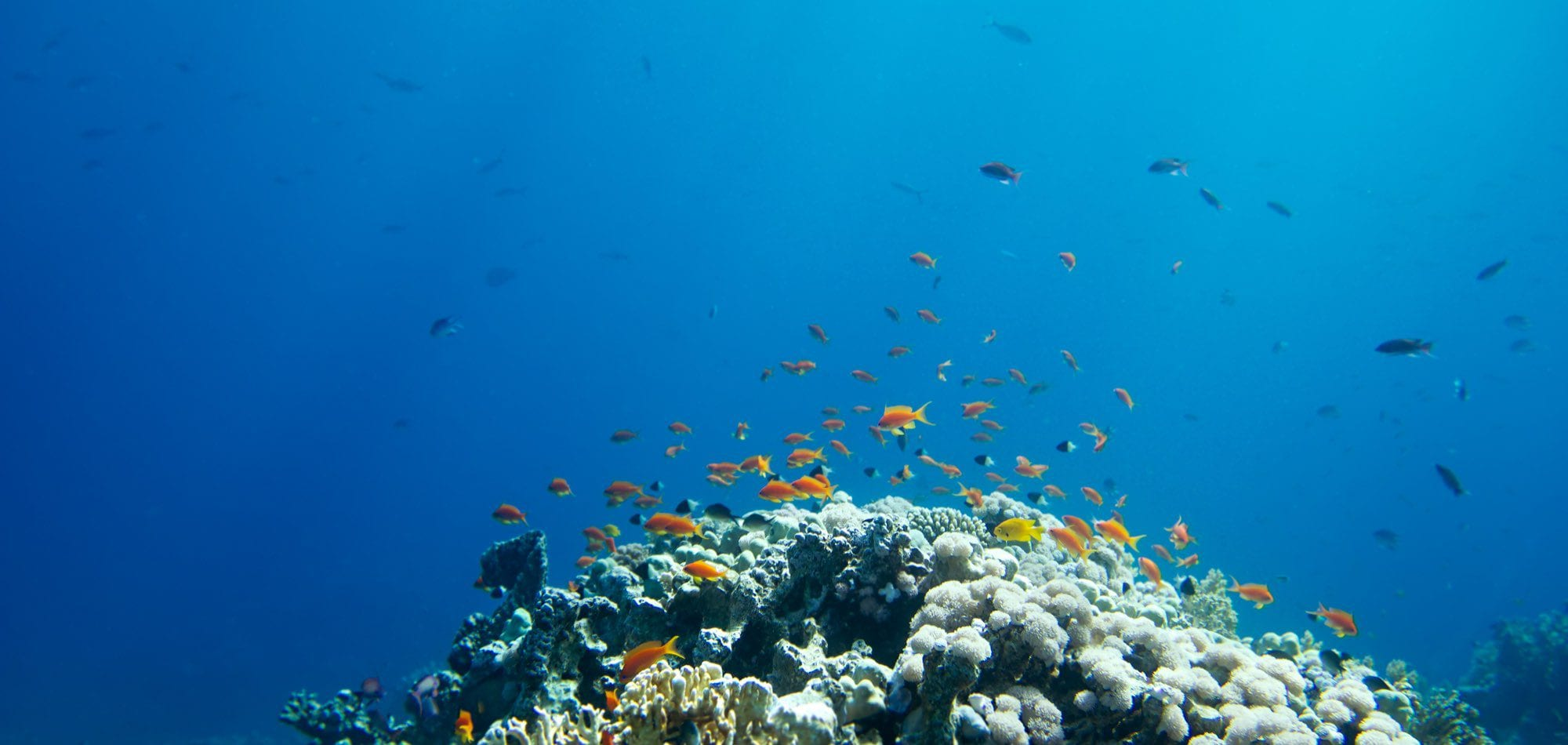 Dive In Australia - underwater image from scuba diving on the Great Barrier Reef