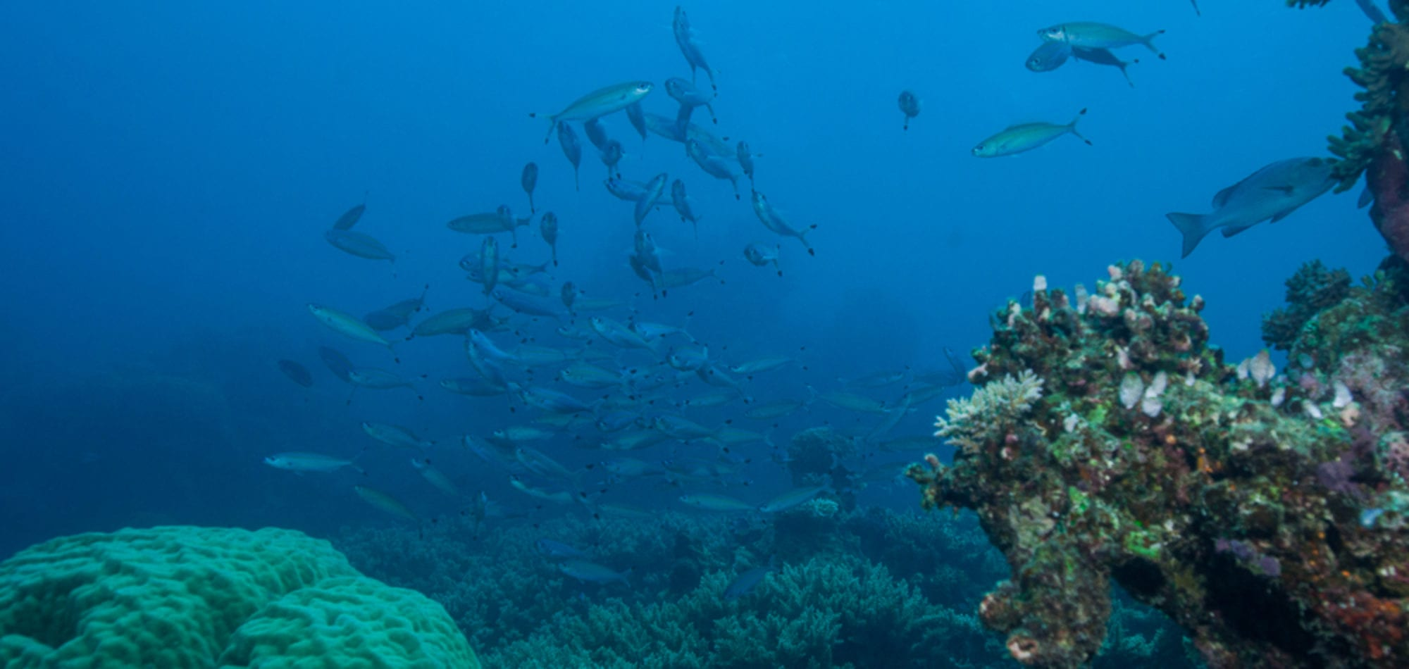 Scuba diving Great Barrier Reef with Dive In Australia trip