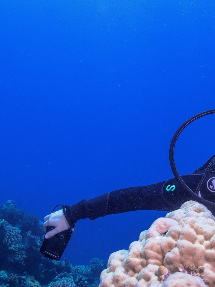 Dive in Australia holidays - scba diver enjoying Great Barrier Reef