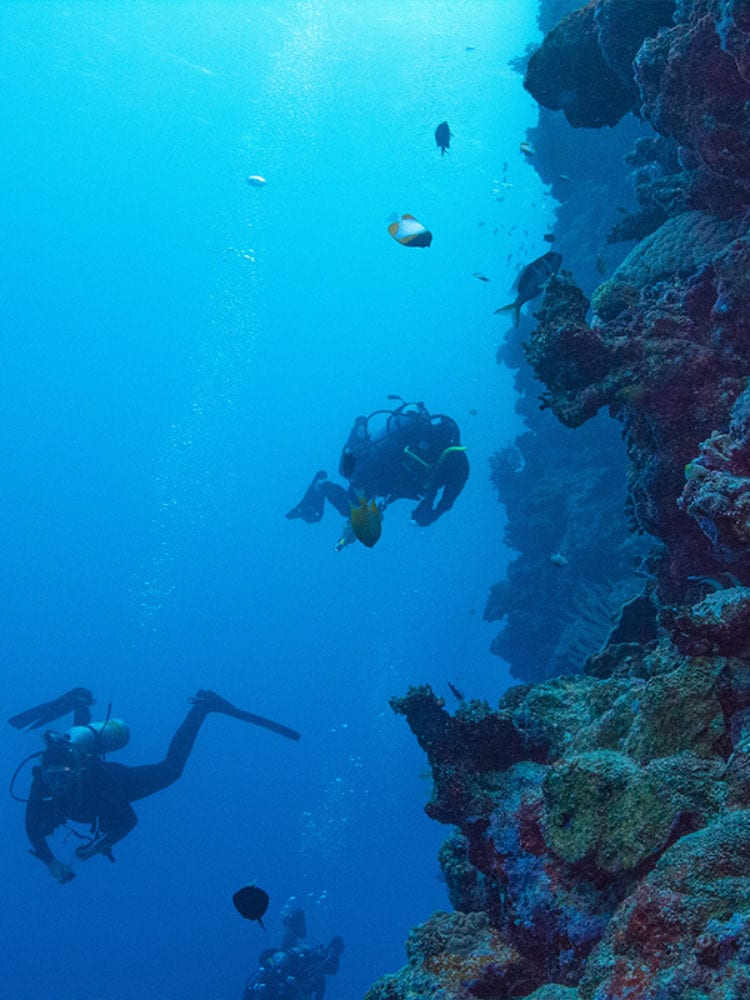 Divers on Ribbon Reefs