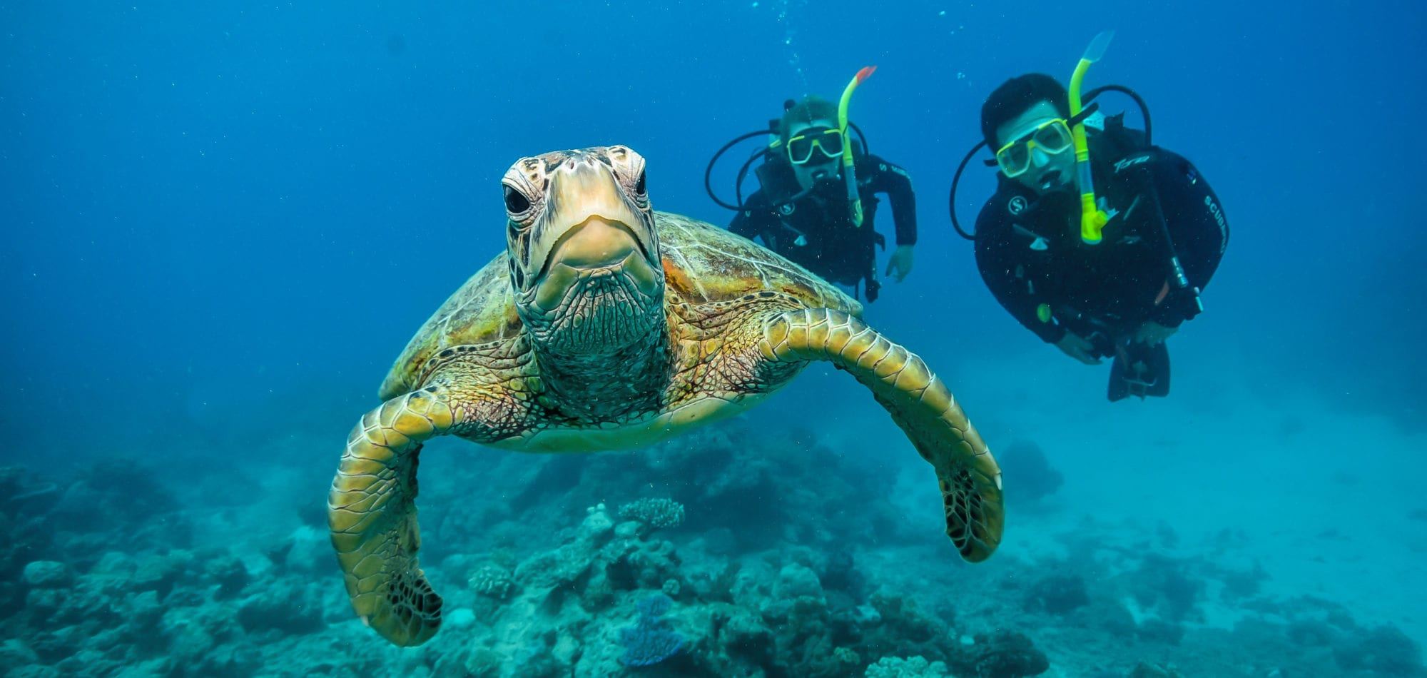 Cairns, learn to scuba dive - divers photographed with a turtle on the Great Barrier Reef