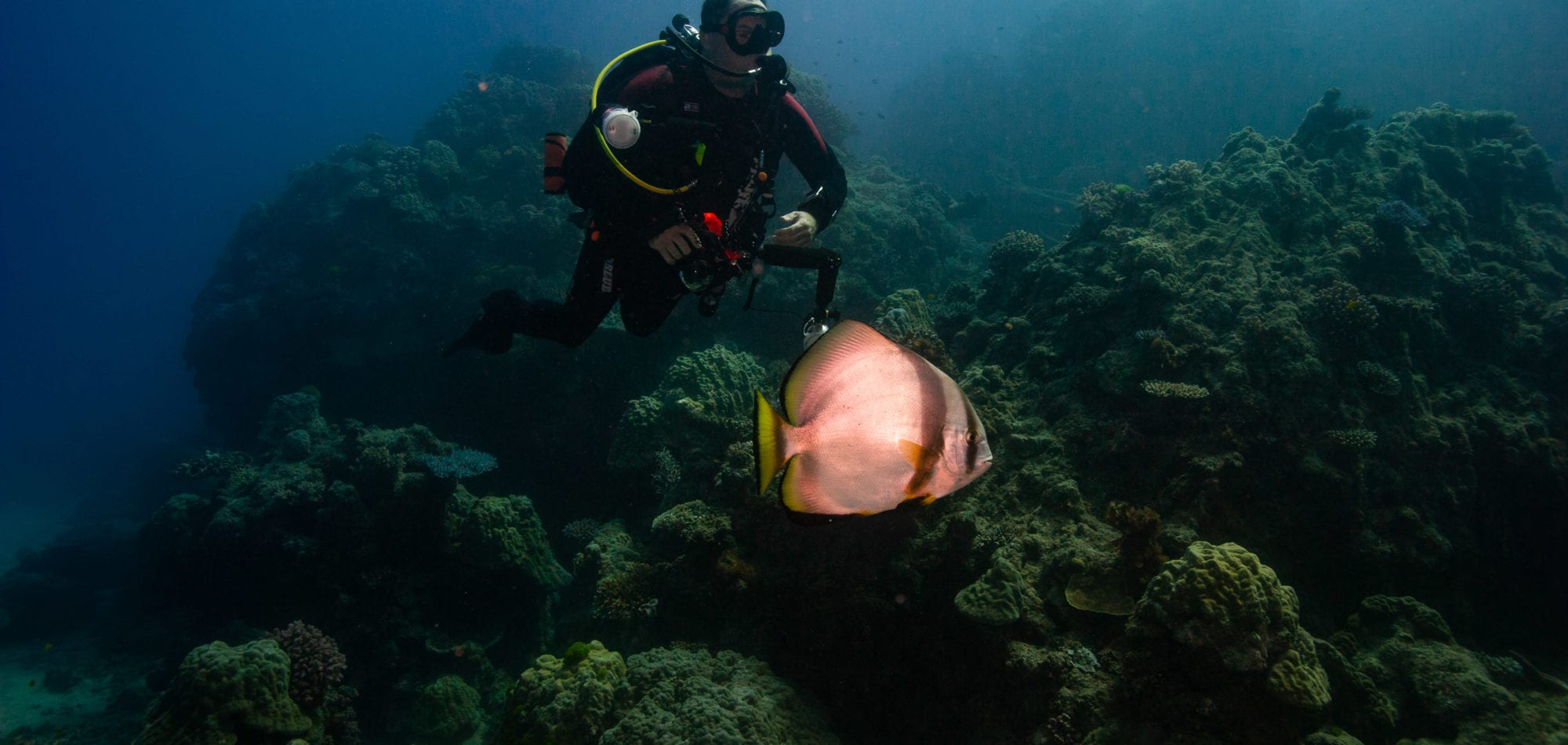 Cairns day trip - diver with Batfish
