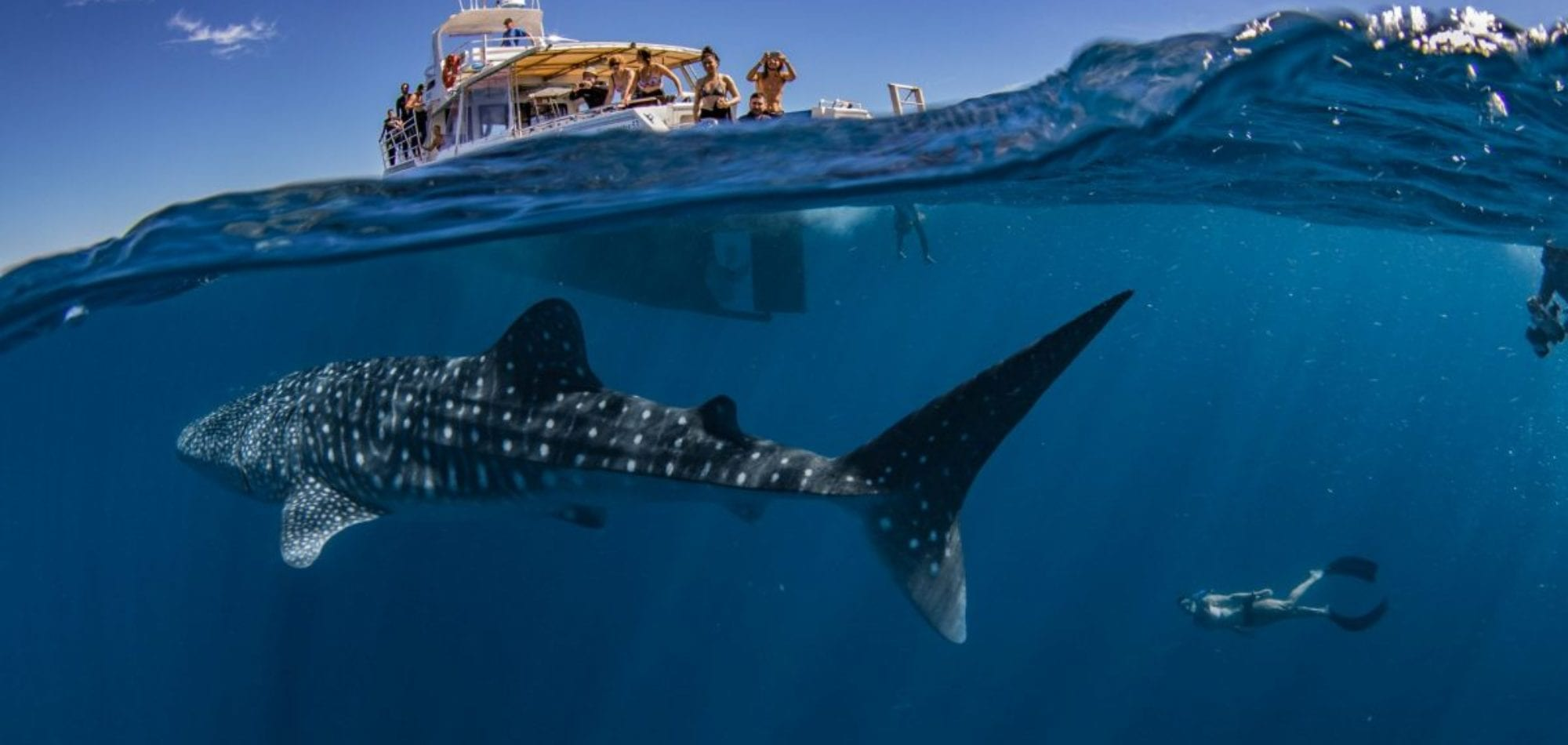 Exmouth Dive - Vessel and Whaleshark