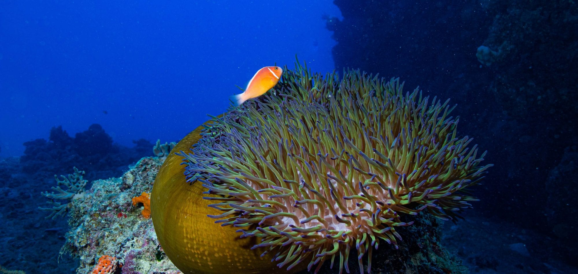 Cairns scuba diving day tour - fish and coral on the Great Barrier Reef, Queensland