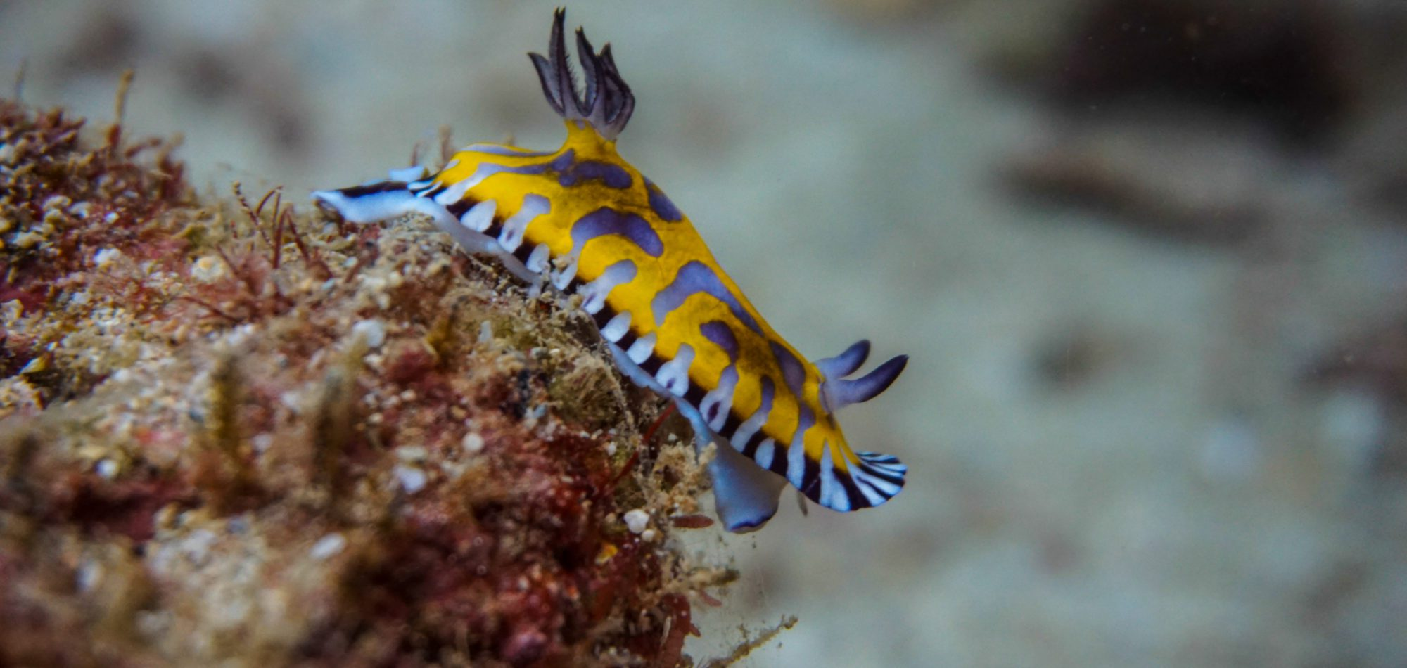 Navy Pier - Nudibranch