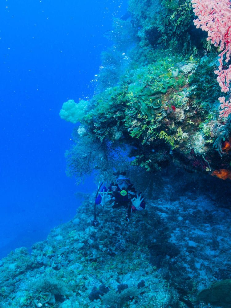Diver - Great Barrier Reef (low)